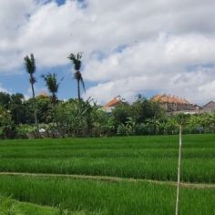 Land for Sale in Bali: Unlock the Hidden Potential