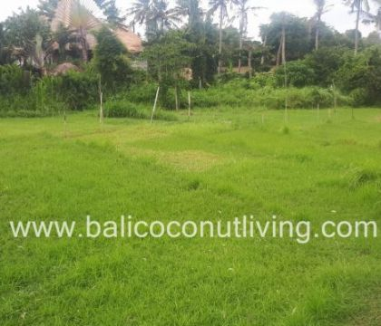 Land For Lease Umalas 3 are